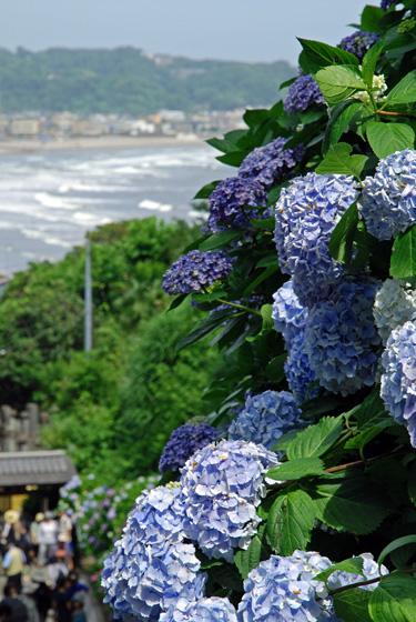鎌倉で一度は行きたい寺院・神社12選