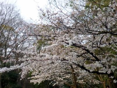 関西お花見2019~桜の名所・見ごろ・穴場・ライトアップ情報~