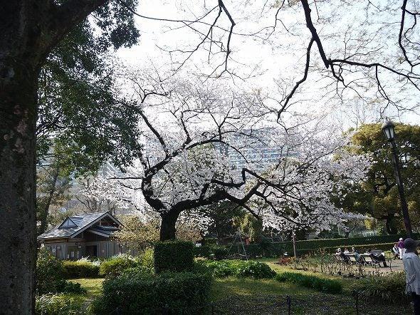 関東お花見~桜の名所・見ごろ・穴場・ライトアップ情報~