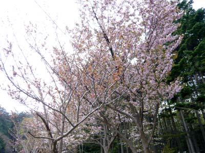 北海道東北お花見2018~桜の名所・見ごろ・ライトアップ情報~